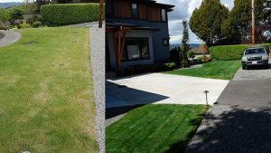 before and after Alamo Heights organic lawn fertilization