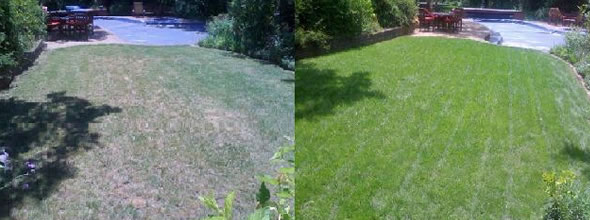 Wilmington organic lawn fertilization before after