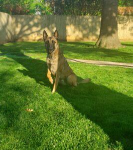 pet safe lawn care edmond